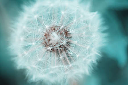 Foto de Beautiful dandelion with seeds, close-up - Imagen libre de derechos