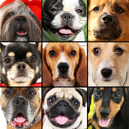 Collage of different dogs