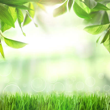 Foto de Spring or summer season abstract nature background with green grass and leaves - Imagen libre de derechos