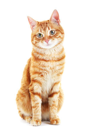 Foto de Portrait of red cat isolated on white - Imagen libre de derechos