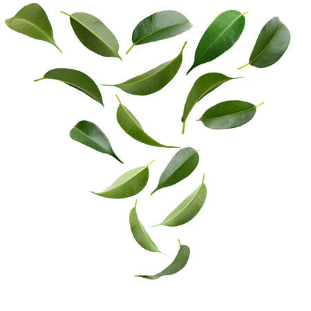 Photo pour Collage of beautiful green leaves isolated on white - image libre de droit