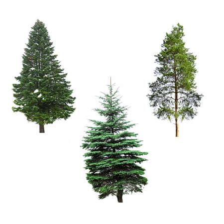 Photo pour Fir-trees, isolated on white - image libre de droit