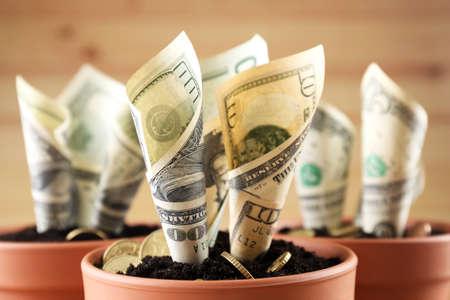 Photo pour Growing money in flowerpots close up - image libre de droit