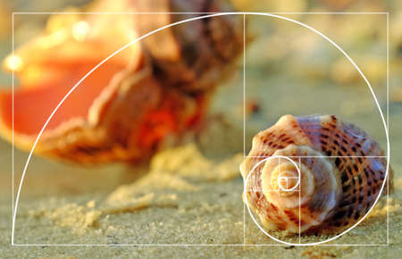 Photo for Beautiful seashells on the beach, close up. Golden Ratio concept - Royalty Free Image