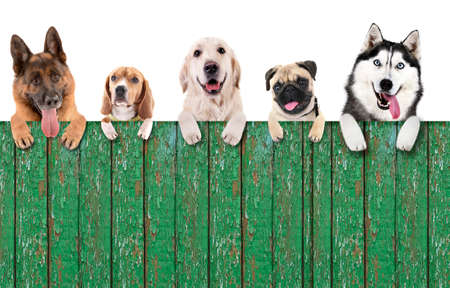 Photo pour Group of dogs in front of white background with wooden space for your text - image libre de droit