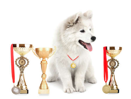 Photo pour Friendly Samoyed dog with trophy cups and medals isolated on white - image libre de droit