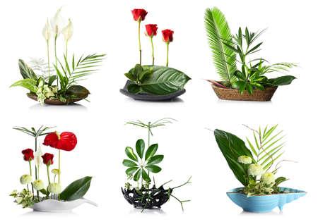 Photo pour Creative floral compositions on white background - image libre de droit