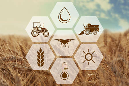 Foto de Icons and field on background. Concept of smart agriculture and modern technology - Imagen libre de derechos