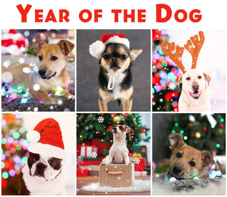 Collage with cute dogs as symbol of 2018 year of Chinese calendar
