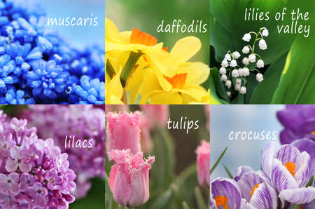 Photo for Collage of beautiful flowers with names - Royalty Free Image