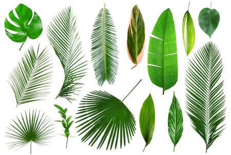 Foto de Different tropical leaves on white background - Imagen libre de derechos