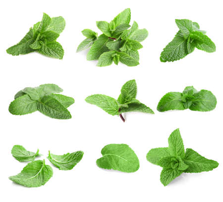 Foto de Fresh lemon balm leaves on white background - Imagen libre de derechos