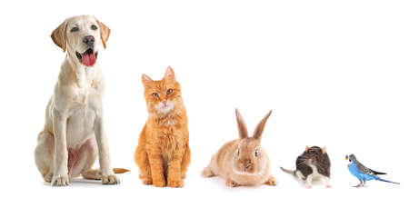 Photo for Funny pets on white background - Royalty Free Image