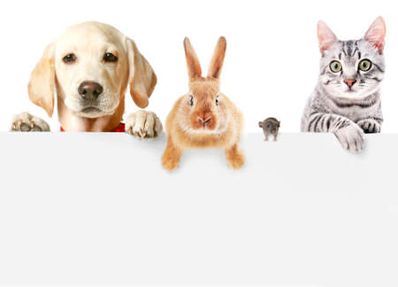 Foto de Funny pets on white background - Imagen libre de derechos