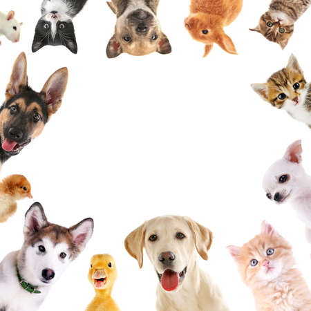 Photo pour Collage of cute baby animals on white background - image libre de droit