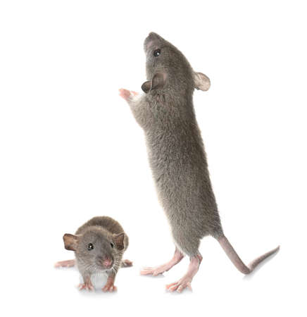 Photo for Little mouse with mother on white background - Royalty Free Image