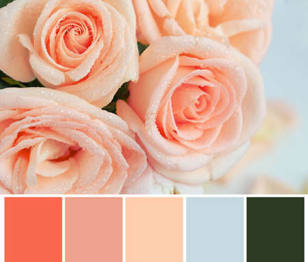 Foto de Palette with salmon color and beautiful flowers, closeup - Imagen libre de derechos
