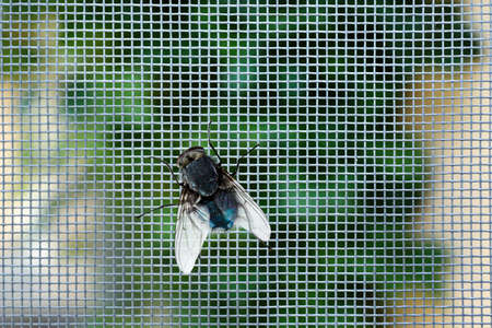 Foto de Fly on window screen, closeup - Imagen libre de derechos