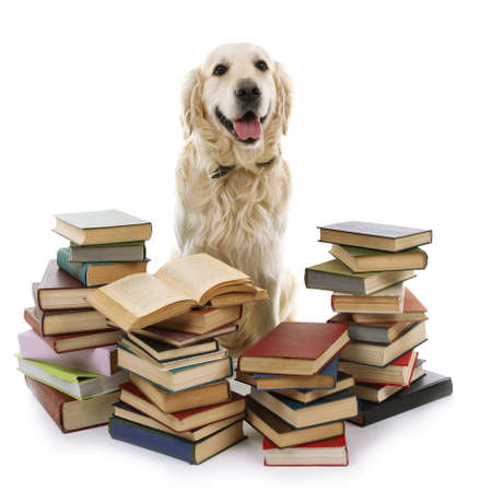 Foto de Portrait of Labrador with pile of books isolated on white - Imagen libre de derechos