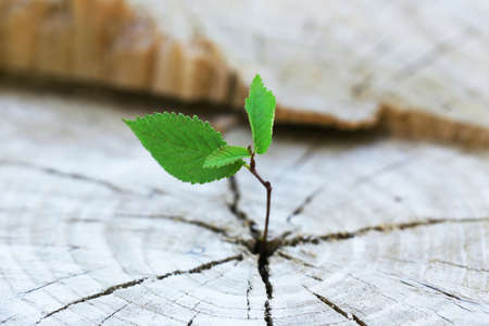 Foto de Beautiful seedling growing in the center trunk as a concept of new life - Imagen libre de derechos