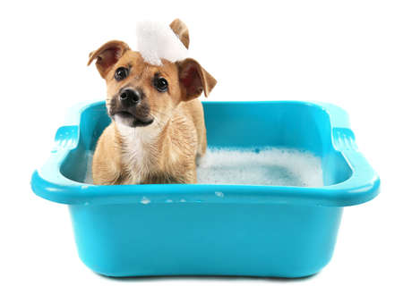 Photo pour Puppy in bath isolated on white - image libre de droit