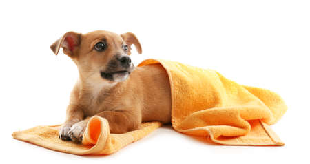 Photo pour Puppy with towel isolated on white - image libre de droit