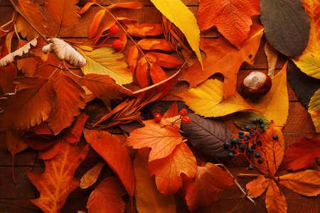 Foto de Colourful and bright fallen autumn leaves background - Imagen libre de derechos