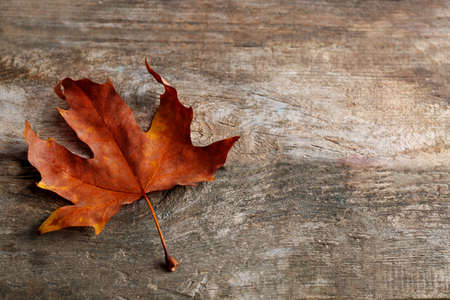 Photo for Dry maple leaf on wooden background - Royalty Free Image