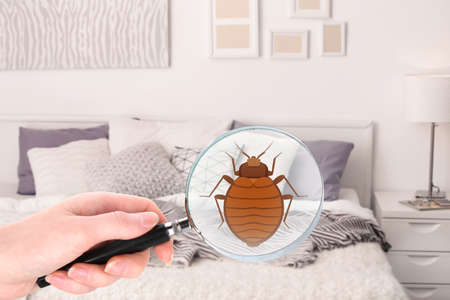 Photo for Woman with magnifying glass detecting bed bug in bedroom - Royalty Free Image