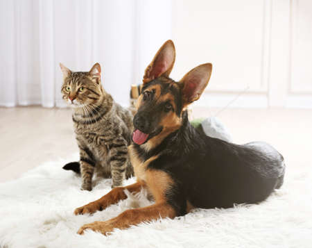 Photo pour Cute cat and funny dog on carpet - image libre de droit