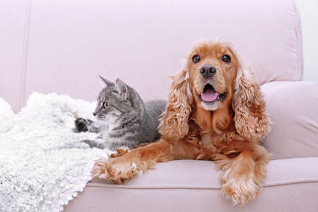 Foto de Cute dog and cat together on couch at home - Imagen libre de derechos