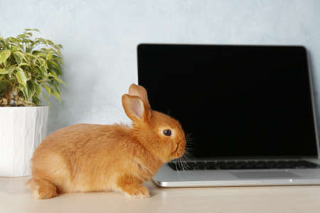 Photo for Cute red bunny sitting near laptop - Royalty Free Image
