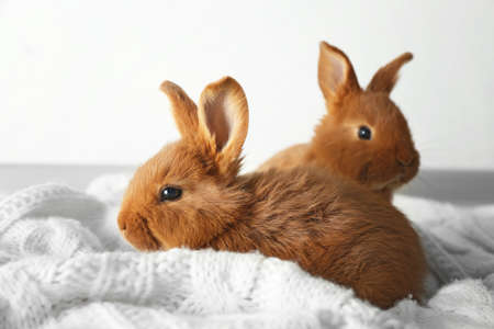 Photo pour Two cute fluffy bunnies on white blanket - image libre de droit