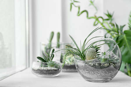 Photo for Mini succulent garden in glass terrarium on windowsill - Royalty Free Image