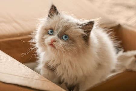 Photo for Cute little kitten in cardboard box, closeup - Royalty Free Image