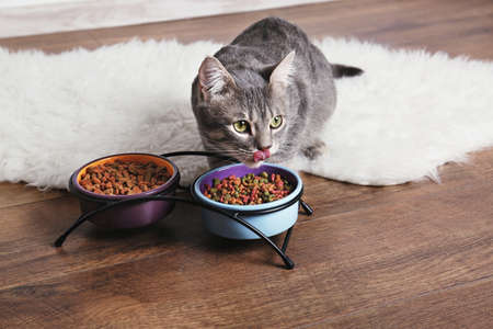 Photo pour Cute cat eating on floor at home - image libre de droit