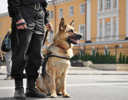Foto de Smart police dog sitting outdoors - Imagen libre de derechos