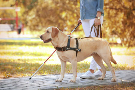 Photo pour Guide dog helping blind woman in park - image libre de droit
