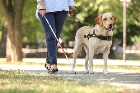 Foto de Guide dog helping blind woman in park - Imagen libre de derechos