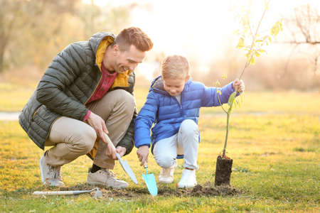 Photo for Father with little son planting tree outdoors - Royalty Free Image