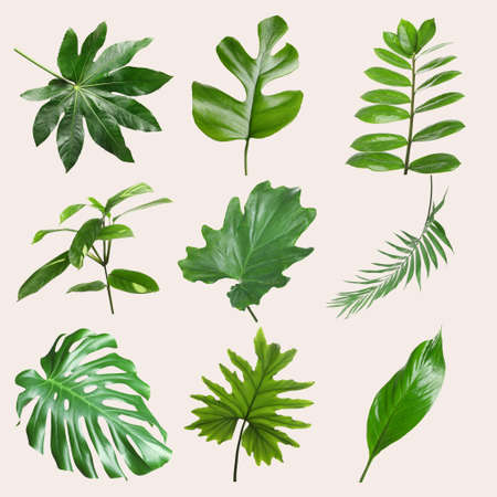 Foto de Set of different tropical leaves on light background - Imagen libre de derechos
