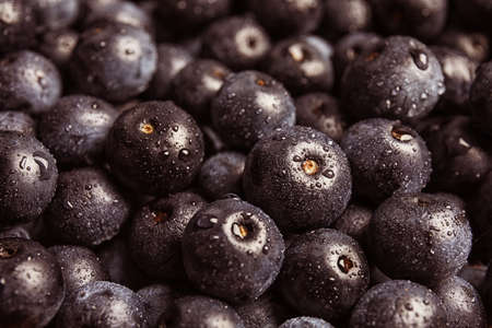 Photo for Fresh acai berries as background - Royalty Free Image