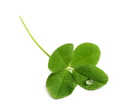 Foto de Green four-leaf clover on white background - Imagen libre de derechos