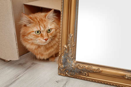 Photo for Adorable red cat peeping from the cardboard box - Royalty Free Image