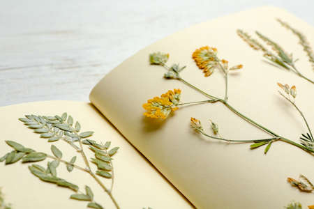 Photo pour Wild dried meadow flowers in notebook on table, closeup - image libre de droit