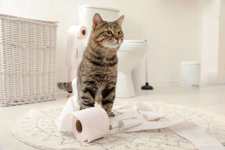 Photo pour Cute cat playing with roll of toilet paper in bathroom - image libre de droit