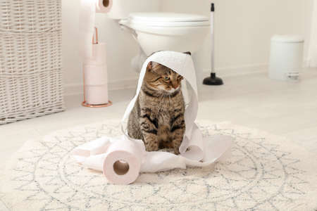 Foto de Cute cat playing with roll of toilet paper in bathroom - Imagen libre de derechos