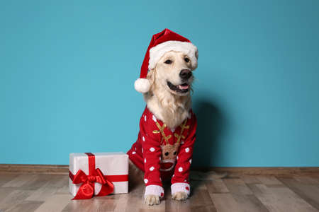 Photo pour Cute dog in Christmas sweater and hat with gift on floor near color wall - image libre de droit