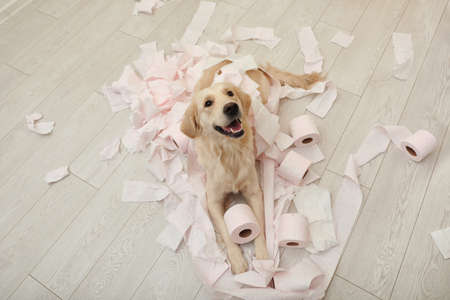 Foto de Cute dog playing with toilet paper in bathroom at home - Imagen libre de derechos