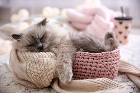 Photo pour Cute cat in basket at home. Warm and cozy winter - image libre de droit